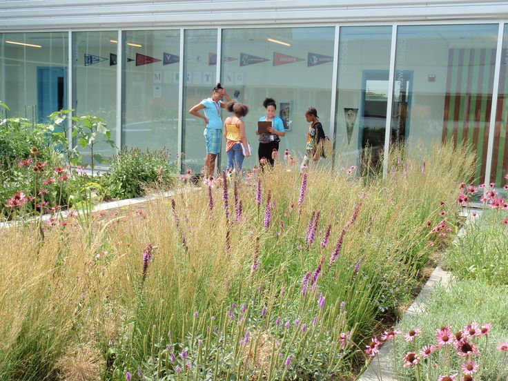 Roy Diblik incorporated perennials into the rooftop