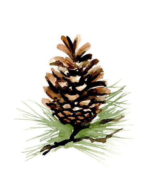 Pine Cone – Art Print – Wall Decor – Watercolor Painting