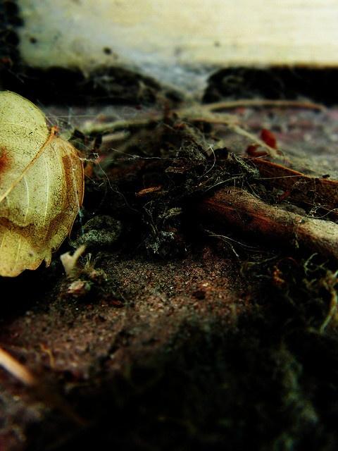 Sparrowsalvage on flickrFlickr, Photos Qui, Sparrowsalvag