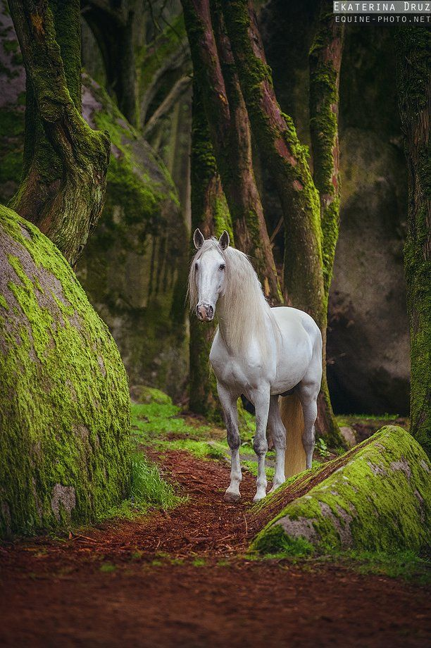Magical forest - Lusitano,  Sintra, Portugal - by Ekaterina Druz