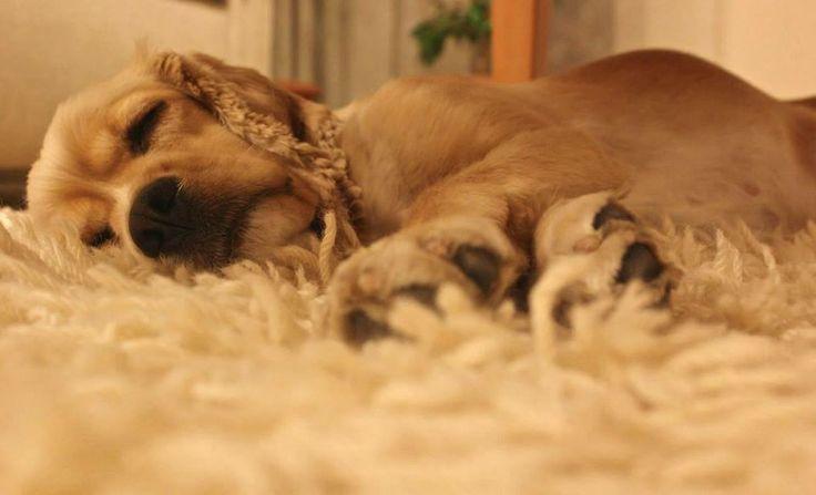 Bütün gün evi bekledim,çok yorgunum çok...  Herkes geldi artık uyurum abi hem de horlayarak