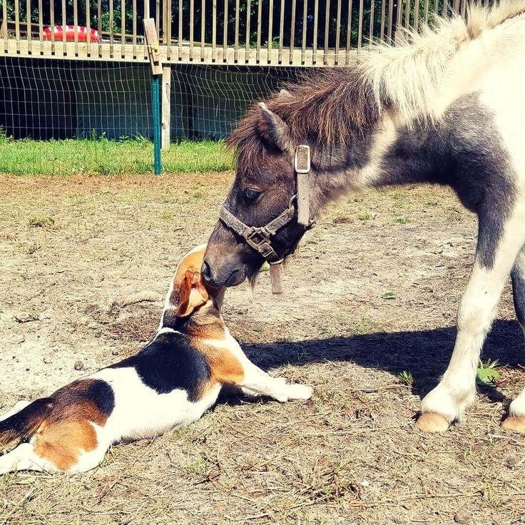 amazing beagle picture