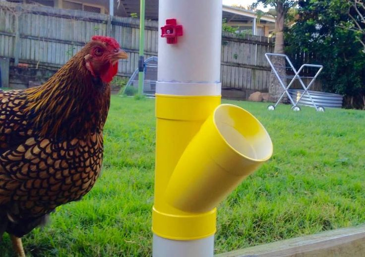 This DIY Waterer is super simple to make. Take the hassle out of chicken keeping. No Mess, No Rats, No Worries