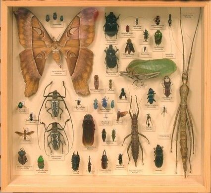 Bohart Museum of Entomology – Davis, California   Atlas Obscura