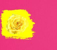 Розовый и желтый цвет