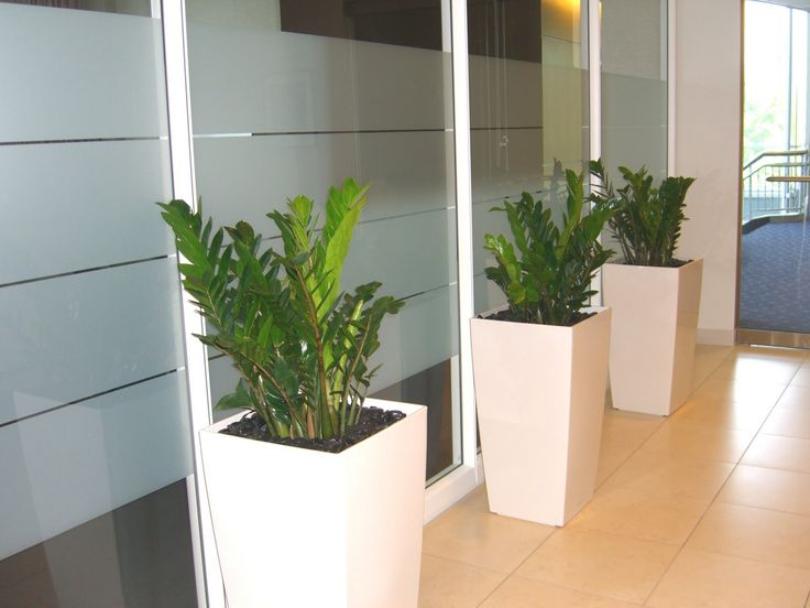 23 best office plants images on pinterest office plants landscaping and offices - Cubicle planters ...
