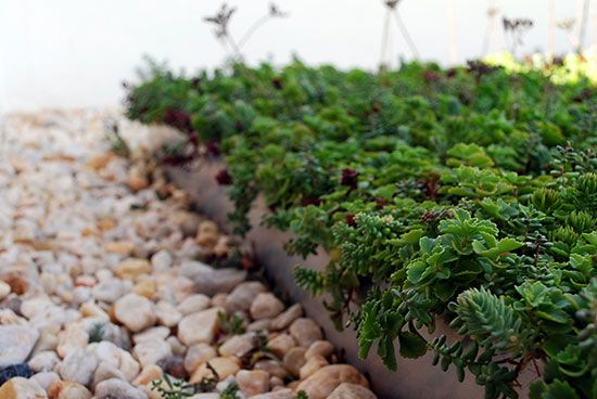 """Garden beds filled with native plants, parking spots reserved for fuel-efficient vehicles and plant-covered roofs that trap rainfall before it runs into storm drains: these simple steps to """"go green"""" have turned a Southern Maryland community college into a model of conservation."""