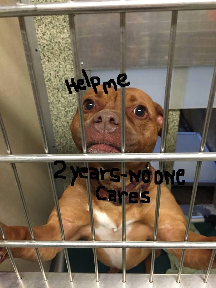 NIGHT WATCHMAN SAYS APPLE IS CRYING IN HER SLEEP.sHE HAS BEEN LIVING BEHIND BARS FOR 3 YEARS AND IS ONE OF THE SHELTERS LONGEST RESIDENTS......Please consider Apple today, or call the shelter for more information: 516-785-5220