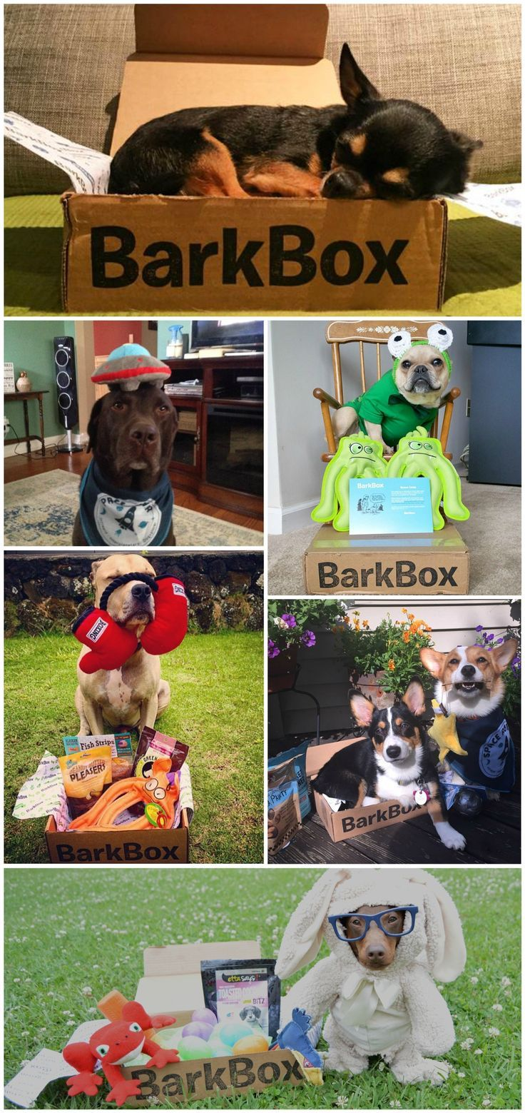 It's not a party unless you serve hot dogs. And BarkBox makes serving your hot dogs easy by delivering the best treats and toys every month (see what we did there?) Each box is curated based on dog size and diet, making it the perfect way to spoil a brand new pup!