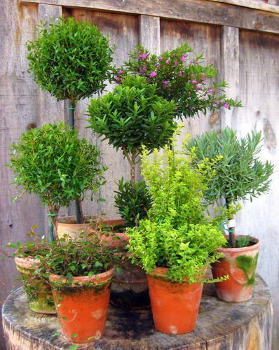 Flower Garden Ideas Wisconsin 87 best topiary images on pinterest   topiaries, garden ideas and