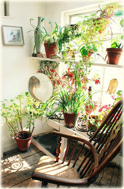 Happy plants on window shelves. / Magic Garden <3