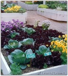 Companion Planting: Love/Hate Relationships in the Garden