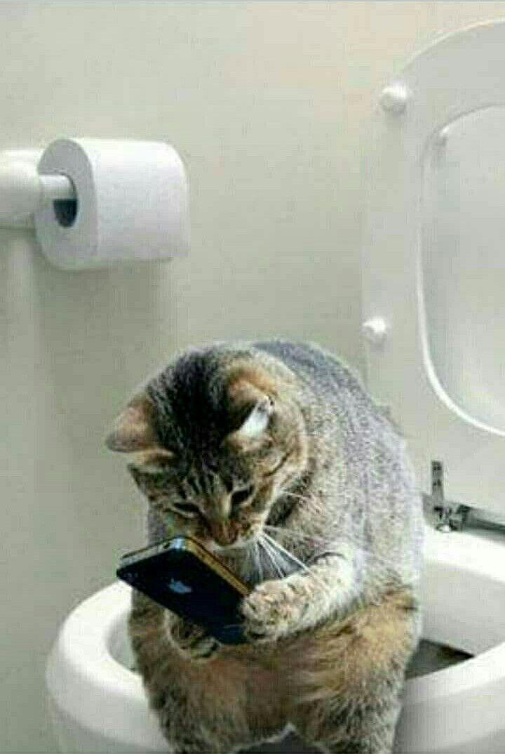 トイレでスマホをいじる面白い猫の壁紙pc