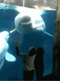 Grumpy Beluga lol YOU WANT A PIECE OF ME KIDS?? WHATCHA WANT?? COME AT ME!