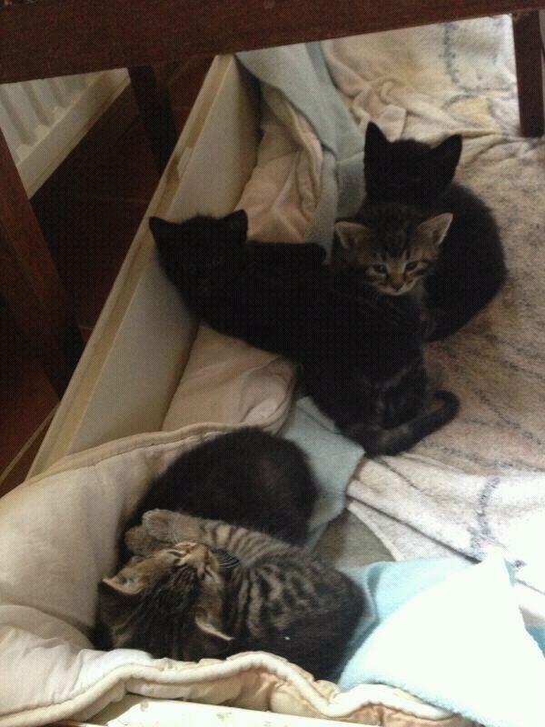 Een van de zwarte katjes wordt mijn nieuwe huisdier!!
