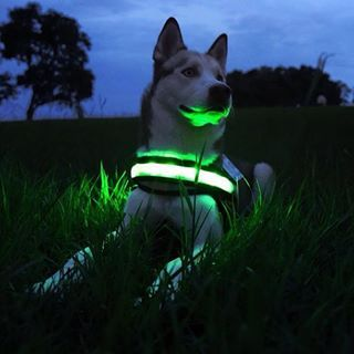 Keep your pup safe with the brightest dog collar out there - Halo Light Bands! With three different light modes you can make those early morning or winter evening walks a lot more fun.