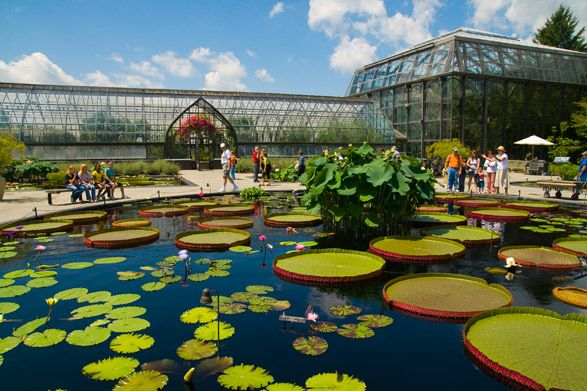 The Lily Pond at Longwood Gardens in Chester County, Pennsylvania