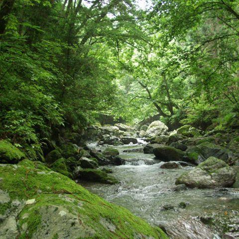 【fujitokuraska】さんのInstagramをピンしています。 《森林が果たす役割って、なんでしょう。 「おいしい水をつくり、川や海の環境をつくる」。こんなお話をお届けしたいと思っています。  #フジモク#フジモクの家#キト暮ラスカ #富士木材#フジモクの家#富士ヒノキ#富士#富士宮#家#注文住宅#工務店#庭#ライフスタイル#富士山#fuji#fujiyama#森林#自然#環境#環境保全#おいしい水#海#駿河湾#富士川#木の家》