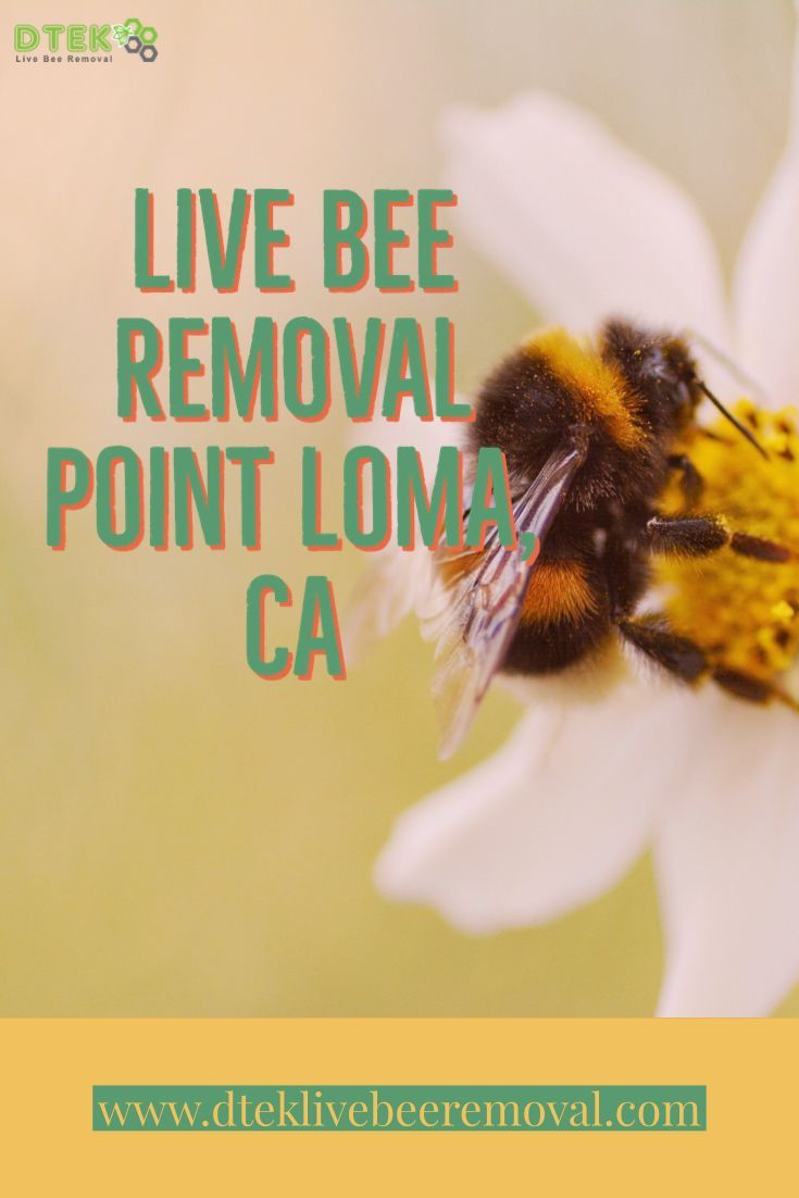 If You Are In Need Of Bee Removal In Point Loma Look No Further Than D Tek Live Bee Removal We Are Experts In The Safe Live Remova Bee Removal Point Loma