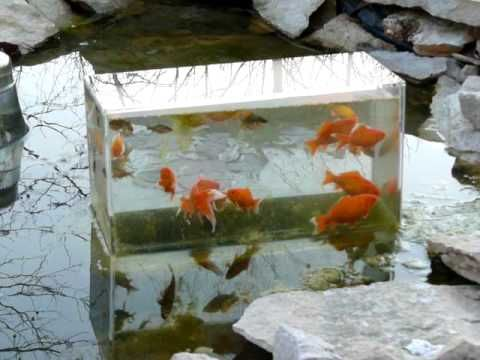 17 best images about container ponds on pinterest for Container ponds with fish