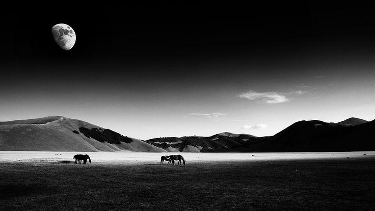 I Cavalli e la Luna