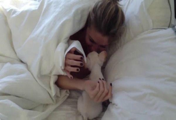 Teneri cuccioli Notizie: Il cucciolo di bulldog nel letto: ecco la sua reaz...