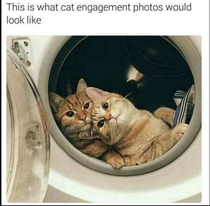 Best Tabby Cat Pics Images On Pinterest Cats Beautiful - 31 photos that prove cats are actually assholes