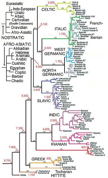 Emergence of Civilization and Fall into Patriarchal Dominion. Evolutionary tree of Indo-European languages suggests the radiation corresponding to the Kurgans occurred around 4,900 BC (6,900 BP) and that they were preceded by Hittite migrations into Anatolia. Time scales in red are BP (Gray and Atkinson (R255) . Significantly Tocharian appears in Buddhist writings from China's Xinjiang province, indicating early far-eastern spread.