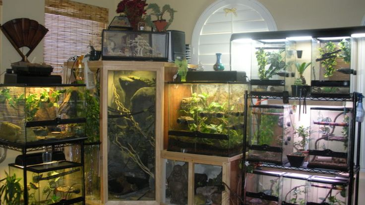 Show Your Tank Set Ups Racks And Reptile Rooms Pets