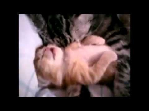 ▶ Top 10 Cutest Animal Videos - YouTube