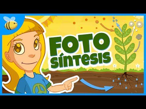 La Eduteca - Las plantas: nutrición y fotosíntesis - YouTube