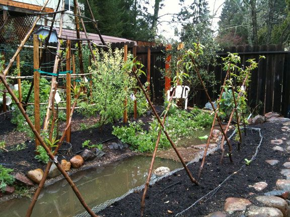 Permaculture rain water collection using dry stream for Jardin urbain permaculture