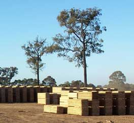 Hayters sawmilling and treatment plant is located at Werombi an hour and half South West of Sydney. We have different types of treated timber, you can select as per your need. Our fully automated treatment plant ensures our products are treated to AS1604, Tuma and TMA as required.