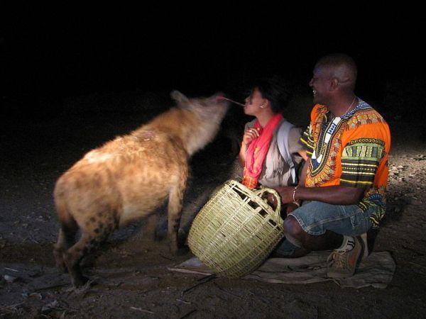 Harer, karmienie hien