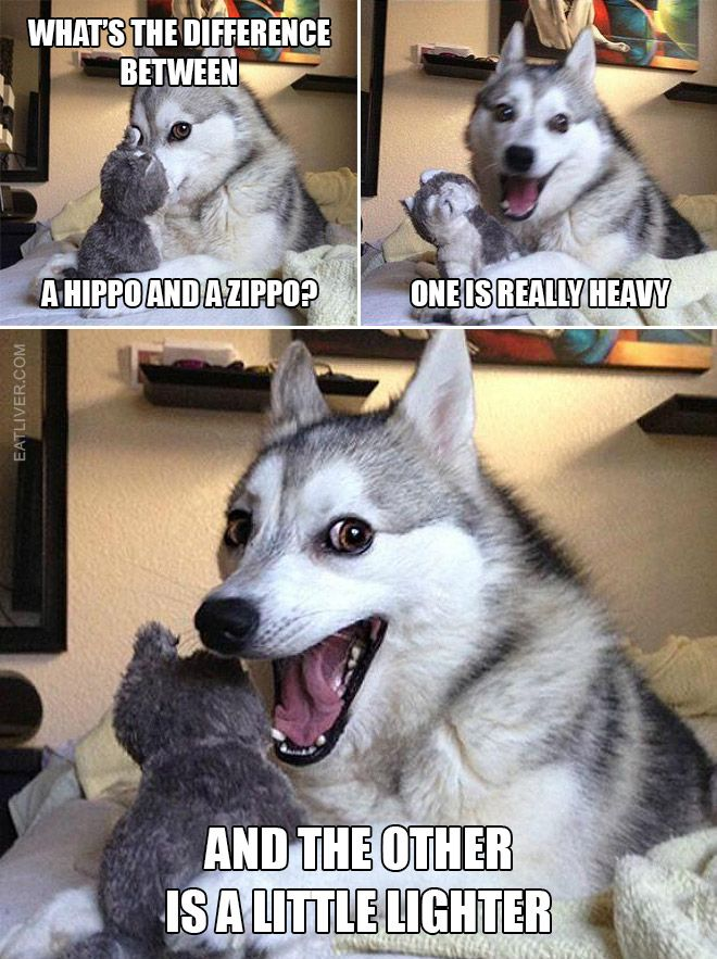 Funny Husky Jokes Meme : Pun dog the best of my humor pin community