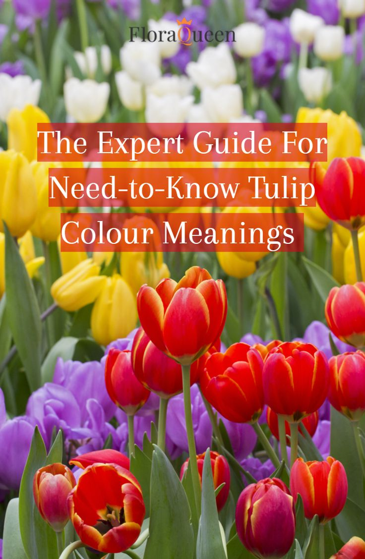 The Expert Guide For Need To Know Tulip Colour Meanings In 2020 Tulip Colors Color Meanings Color