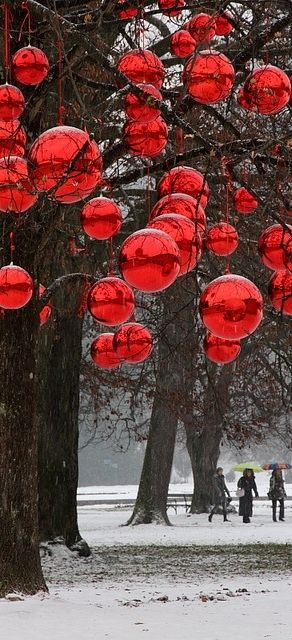 .Christmas in trees