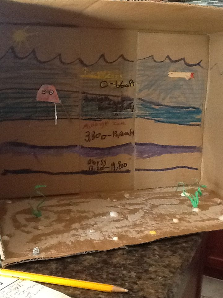 24 best images about school projects on pinterest the for Fishing science fair projects
