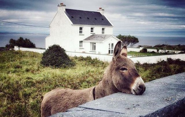 The Cliffs of Moher and a friendly neighborhood donkey are among some of the greatest images to have come out of Ireland this year.