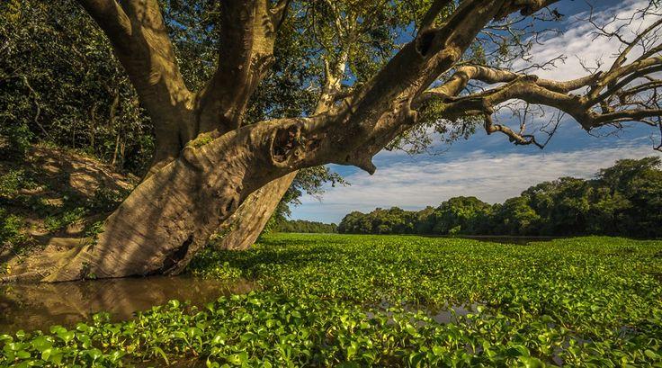 Dia da Amazônia: em prosa e imagens - Conexão Planeta