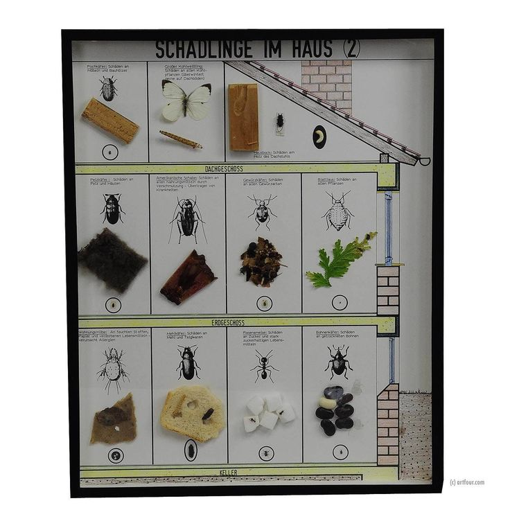 Excited to share the latest addition to my #etsy shop: a great vintage school teaching display of household pests (2) http://etsy.me/2C60KfN #housewares #homedecor #scientific #pests #interiorarchitecture #loftdesign #specimen #naturalhistory #curiosities