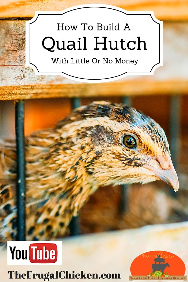 best 25 quail coop ideas on pinterest quail quails and chicken