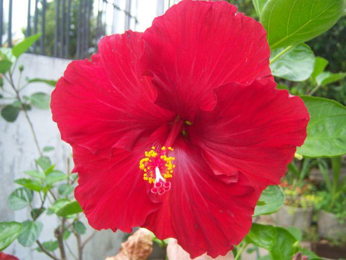 88 best images about plantas y flores on pinterest un for Una planta ornamental