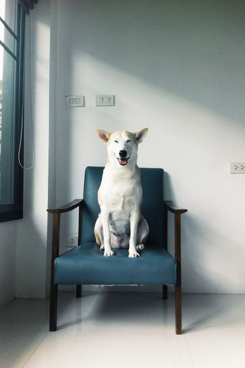 Best Gluta X Gollum The Family Images On Pinterest Happy Dogs - Meet gluta the smiling dog that beat cancer