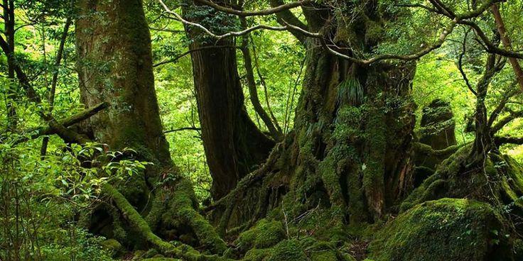 Gecenin ağaçlar üzerinde yarattığı değişimler-  #ağaçlar #doğa