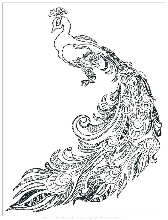 Coloring Pages Peacock Peacock Feather Coloring Page Free