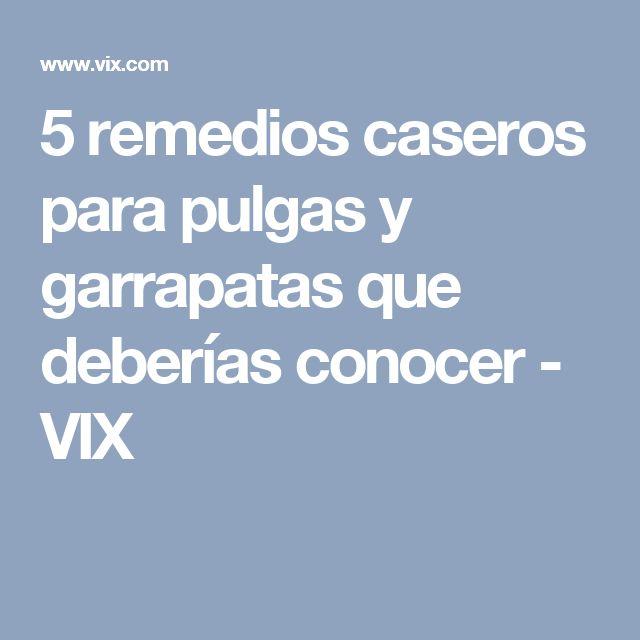 5 remedios caseros para pulgas y garrapatas que deberías conocer - VIX