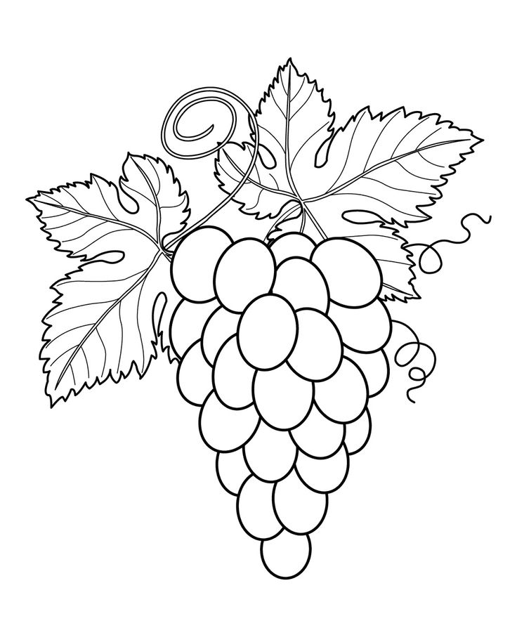 grapes with leaves fruits and berries coloring pages for kids printable free - Fruit Coloring Pages Toddlers