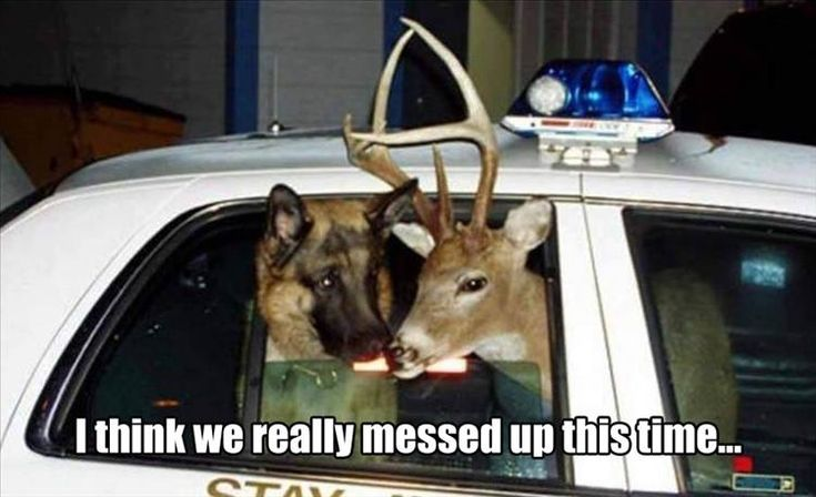 http://videoswatsapp.com/browse-funny-clips-videos-1-date.html  22 Funny Animal Pics for Your Friday  #compartirvideos  #funnyclips