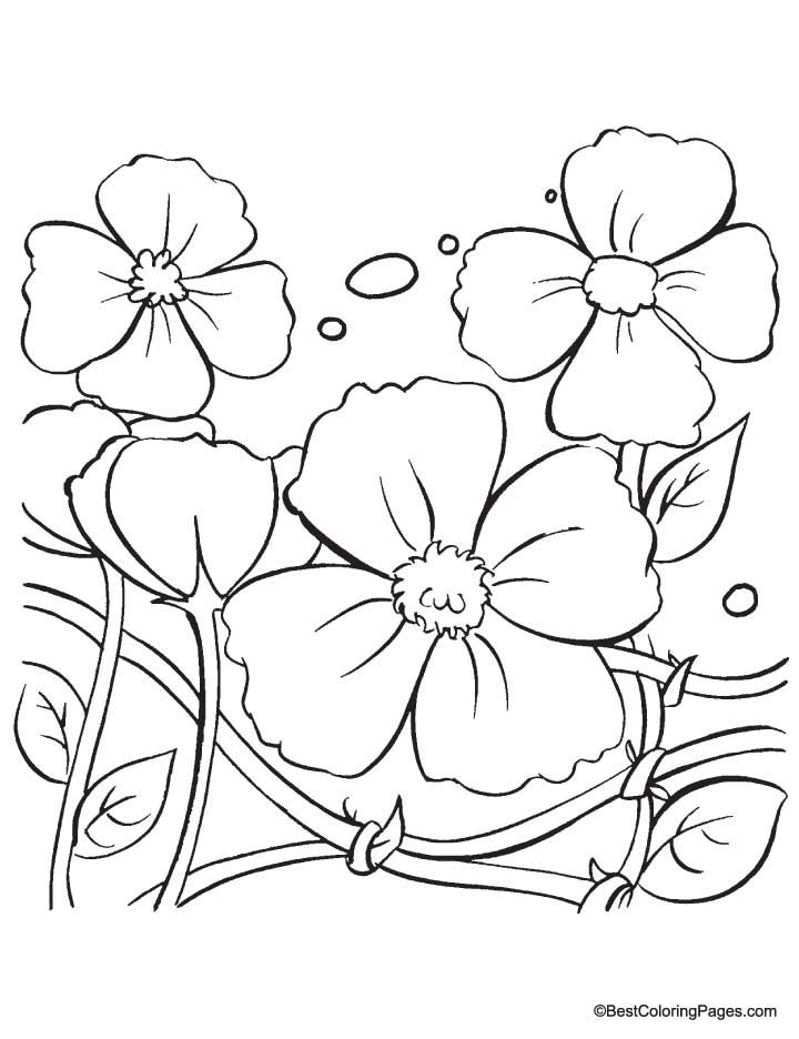 Poppy Flowers Coloring Pages Download Free Poppy Flowers In 2020 Poppy Coloring Page Flower Coloring Pages Veterans Day Coloring Page